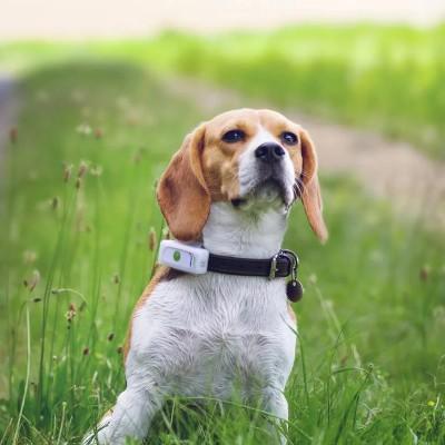 Weenect Localizzatore GPS per Cani
