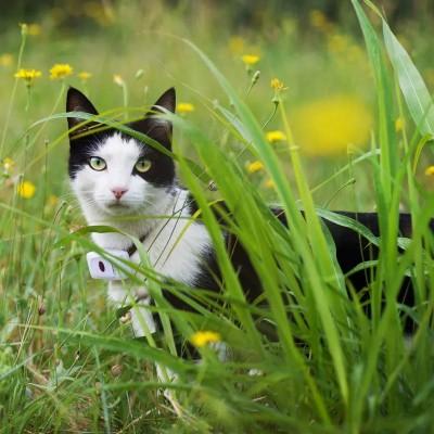 Weenect Cats 2 Localizzatore GPS per Gatti