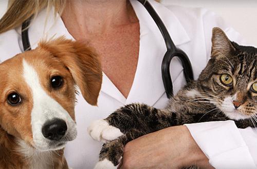 I veterinari credono nel Pet Food thumb