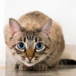 insufficenza renale cronica gatto;