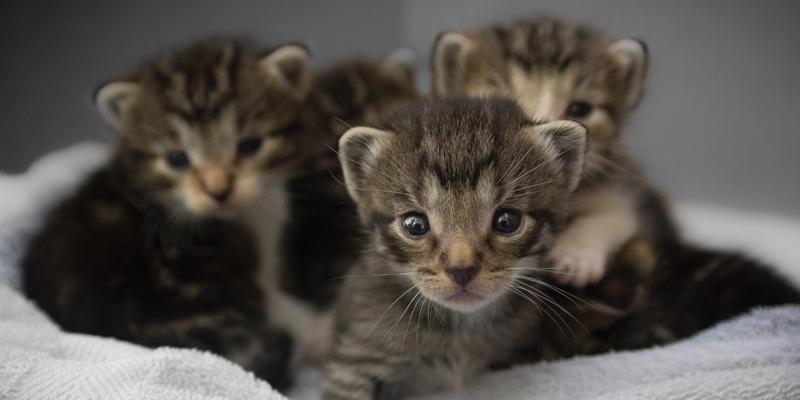 Allattamento Gattini Vietato Improvvisarsi Robinson Pet Blog