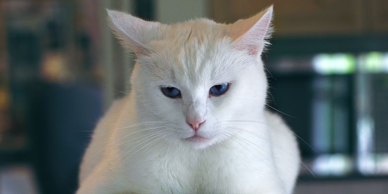 Sole A Rischio Anche Cane E Gatto Robinson Pet Blog