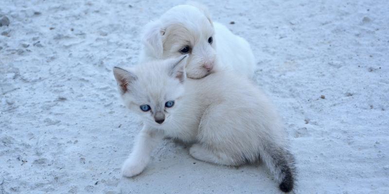 Cuccioli Quando è Giusto Allontanarli Dalla Mamma Robinson Pet Blog