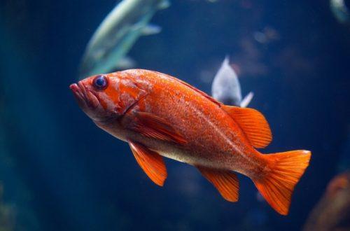 Allestire un acquario, l'intervista all'esperto thumb