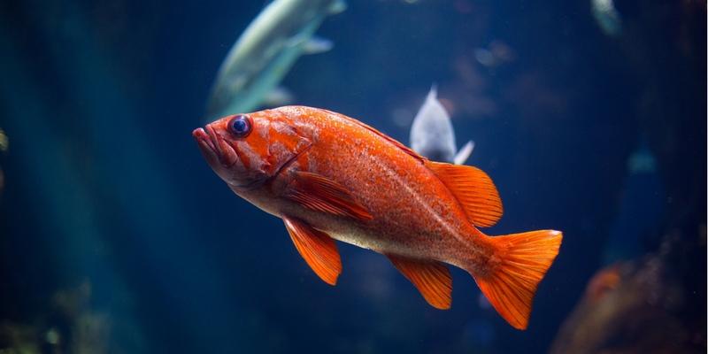 Allestire un acquario, l'intervista all'esperto cover