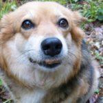 cane-mangia-crocchette