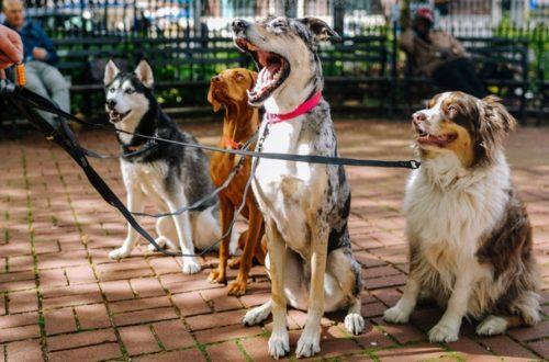 Passeggiare con il cane, ecco cosa dice la legge thumb