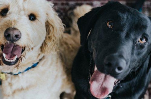 Allergie e intolleranze alimentari, le soluzioni del Pet Food thumb