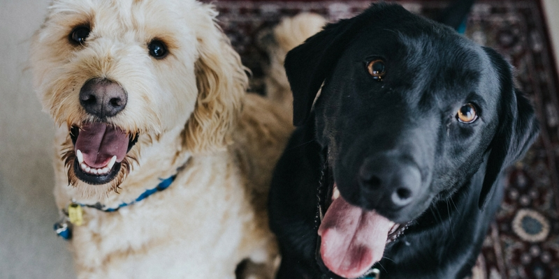 Allergie e intolleranze alimentari, le soluzioni del Pet Food cover