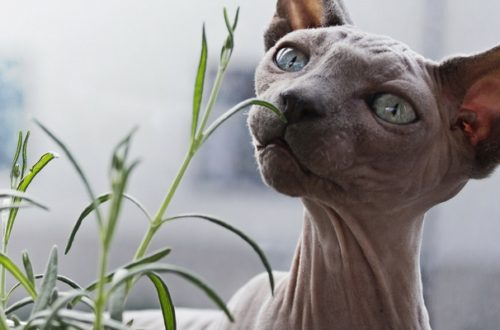 Piante velenose per gatto e cane, quali sono? thumb