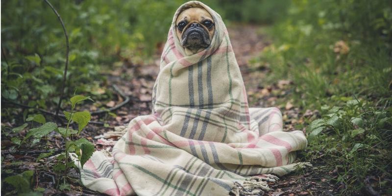 Cappottini Per Cani Quali Scegliere Robinson Pet Blog