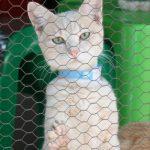 gatto-al-gattile