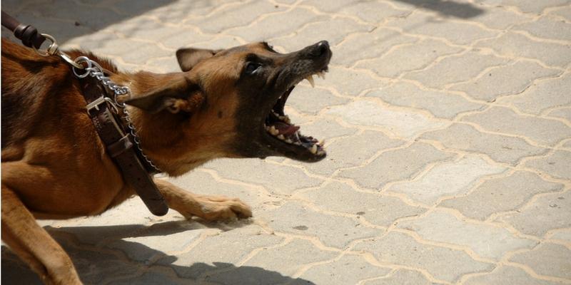 comprendere il linguaggio del cane io e il mio cane