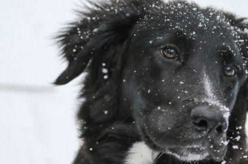 Neve e temperature glaciali, i consigli dell'Enpa thumb
