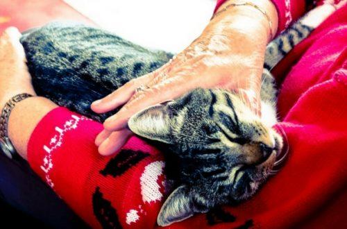 Pet therapy, in Svizzera sì ai cani e gatti & co. nelle case di riposo thumb
