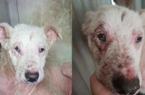 Cani da adottare: Soul vittima dell'indifferenza thumb