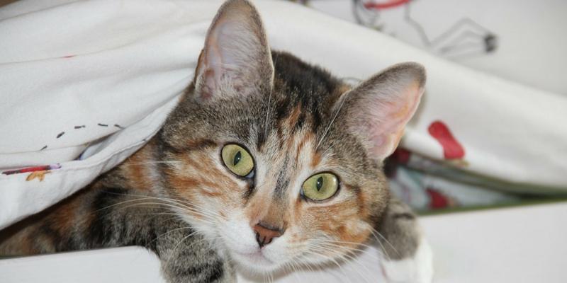 Cosa Fare Quando Il Gatto Sporca Fuori Dalla Lettiera Robinson Pet