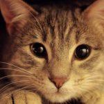 gatto-nascosto-sotto-al-letto