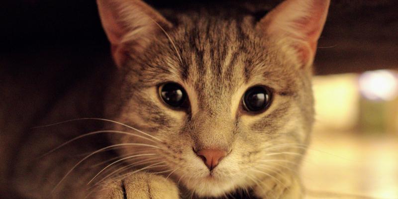 Cistite Nel Gatto Cosè E Come Si Cura Robinson Pet Blog
