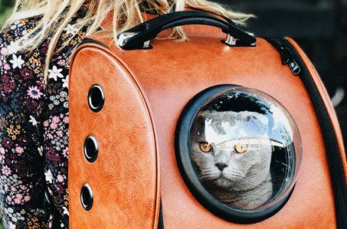 Viaggiare con il gatto: 5 consigli anti-stress prima di partire thumb