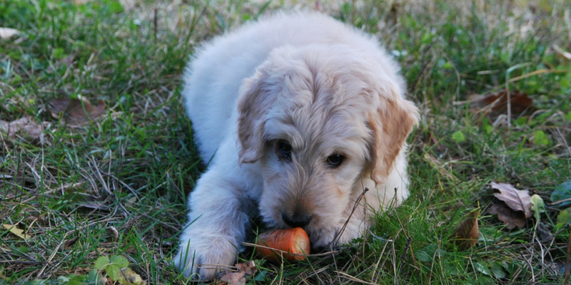 Scopriamo quali verdure possono mangiare i cani cover