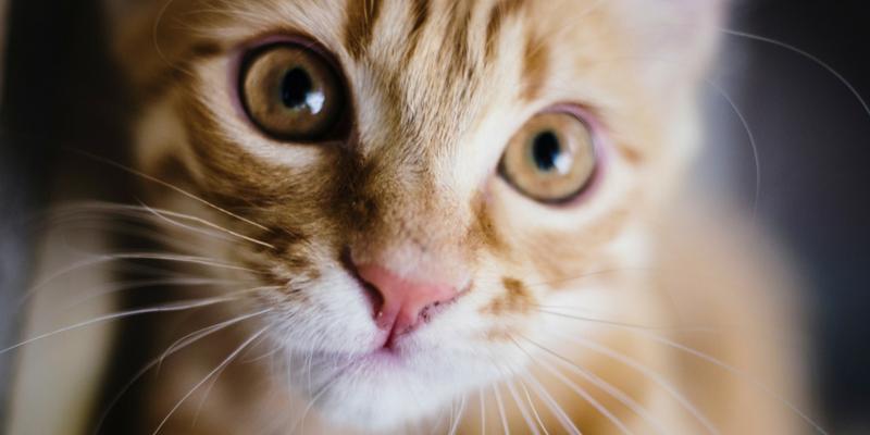 Cosa Fare Se Il Gatto Non Dorme Di Notte Robinson Pet Blog