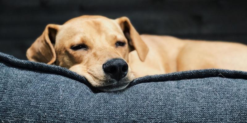 Cucce Per Cani Come Scegliere La Migliore Robinson Pet Blog