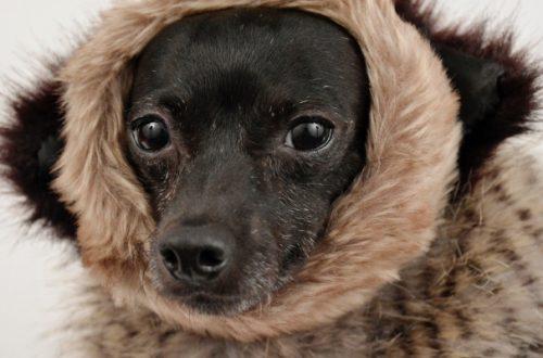 Vestiti per cani, moda o utilità? thumb