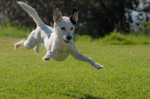 Integratori per cani: perché il calcio è importante e quando farne uso thumb