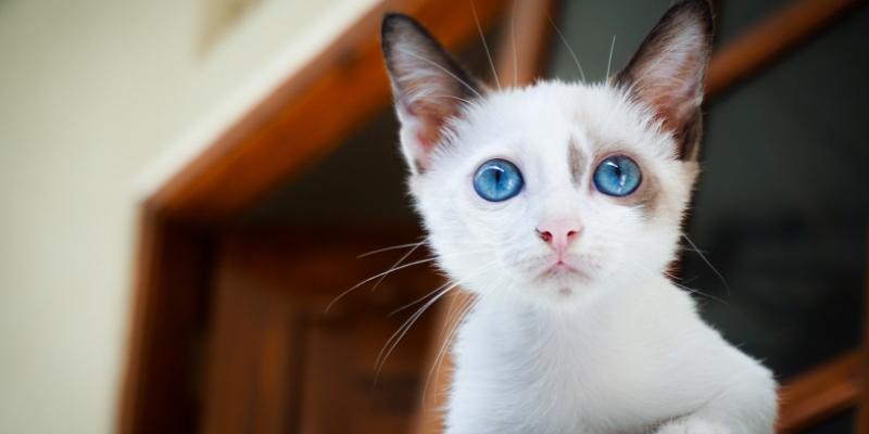 Miglior cibo per gatti, la classifica cover
