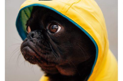 Impermeabili per cani, un must have durante il cambio di stagione thumb