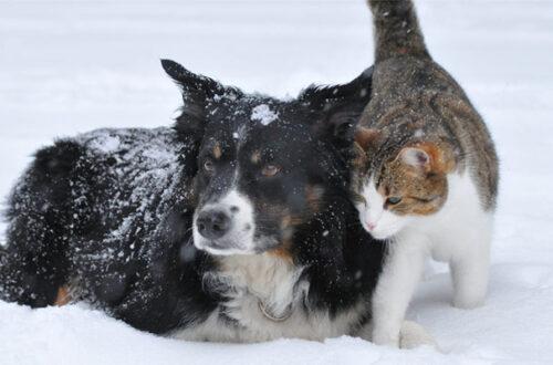 Cucce invernali per cani e gatti: 5 consigli per scegliere le più calde thumb