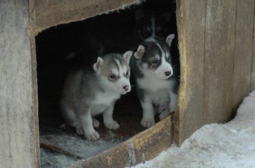 Cucce per cani come scegliere le più calde per l'inverno thumb