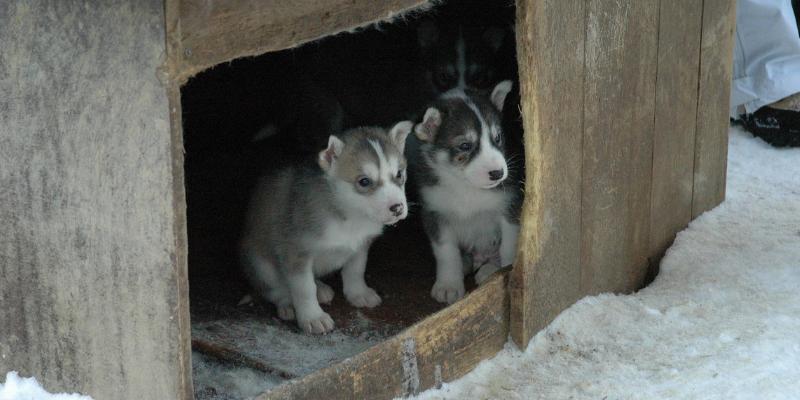 Cucce Per Cani Come Scegliere Le Più Calde Per Linverno Robinson