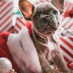 regalare-cuccioli-a-natale