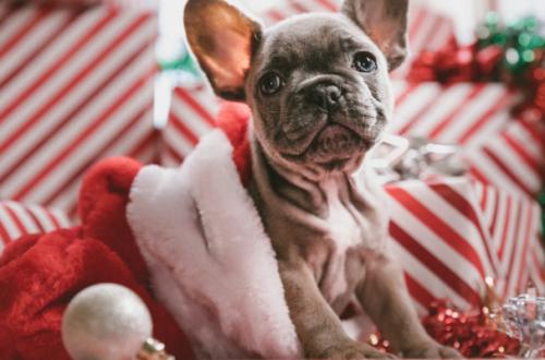 Cuccioli di cane in regalo, pensiamoci bene thumb