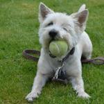 cane-che-gioca-con-la-palla