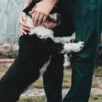 cane-grattato-dal-padrone