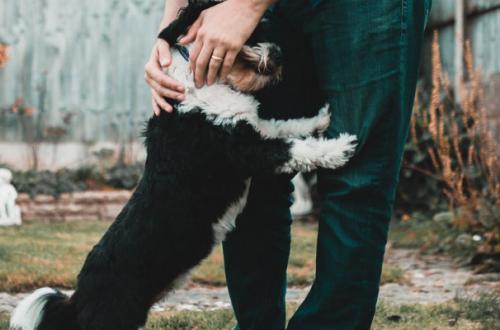 Dermatite interdigitale del cane, consigli e rimedi naturali thumb