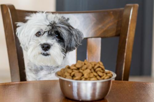 Quali sono le crocchette per cani più appetibili? La classifica thumb