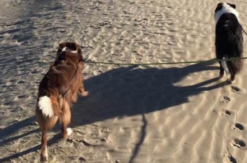 A Cervia, passeggiata a sei zampe in riva al mare thumb