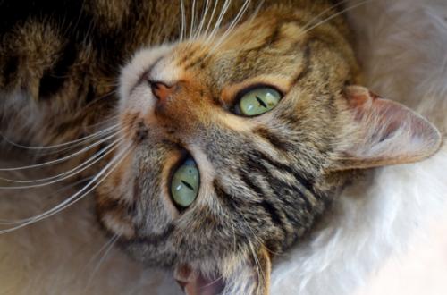 Cibo per cani ai gatti, attenzione a pericolose carenze thumb