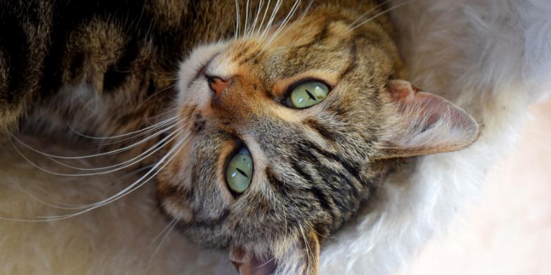 Il Cibo Per Cani Va Bene Ai Gatti No Ecco Perché Robinson Pet Blog