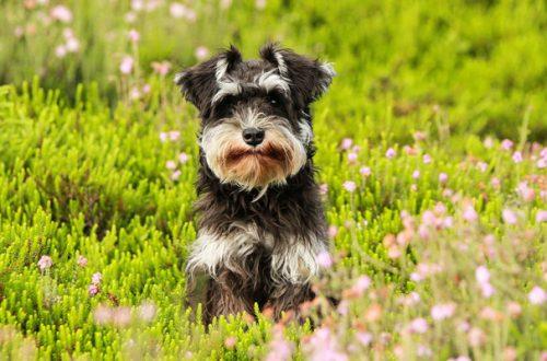 Antiparassitario per cane: come applicarlo nel modo corretto thumb