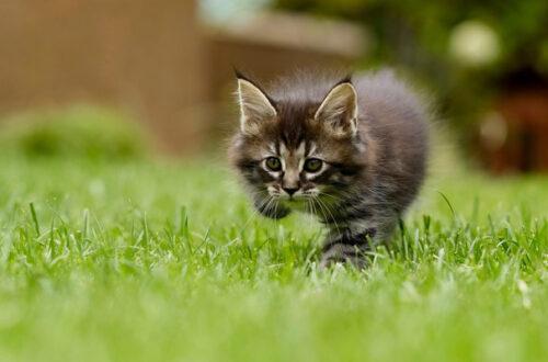 Antiparassitari per cani: come proteggere il gatto? thumb