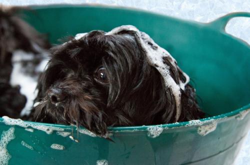 Lavare il cane: quando e come farlo e quale shampoo scegliere thumb