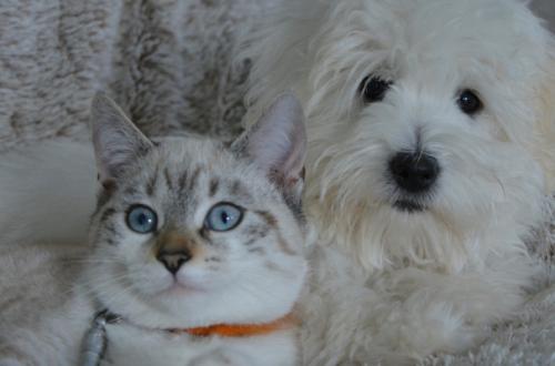 Perdita di pelo nel cane e nel gatto: come comportarsi? thumb