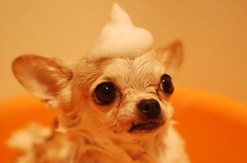 Shampoo per cani: come scegliere il più adatto thumb