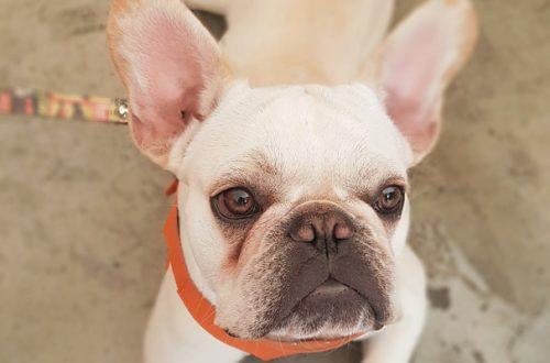 Lacrimazione eccessiva nel cane: come curarla thumb
