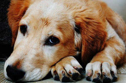 Cosa fare se il cane non smette di tossire thumb
